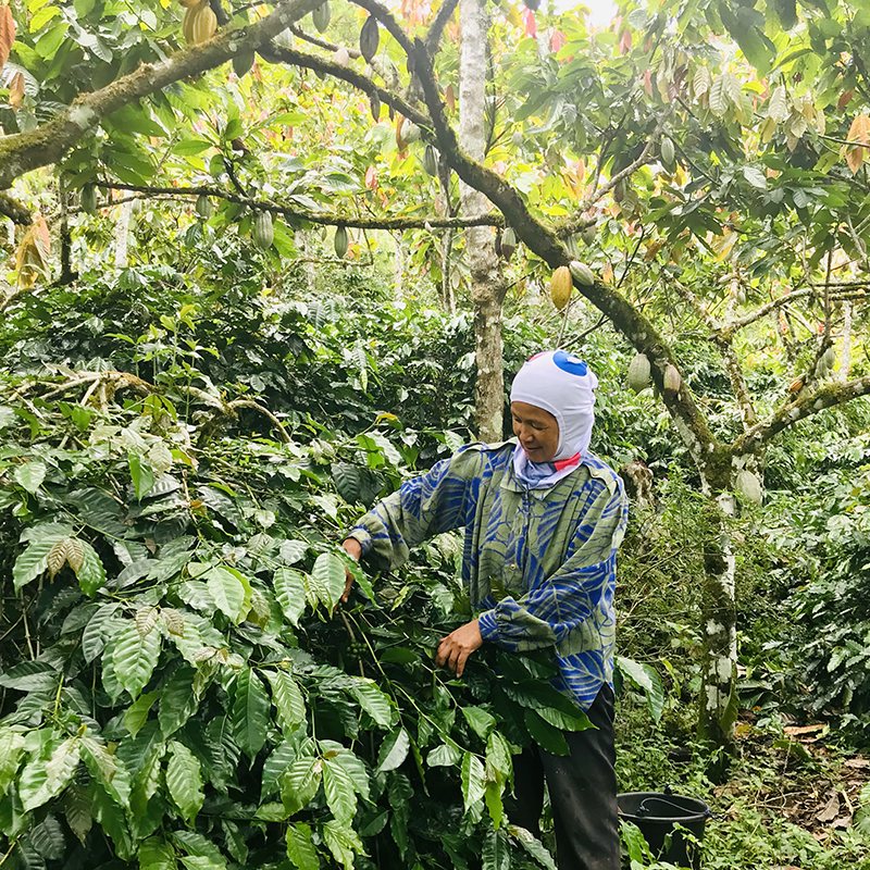 Toraja-coffee Producer