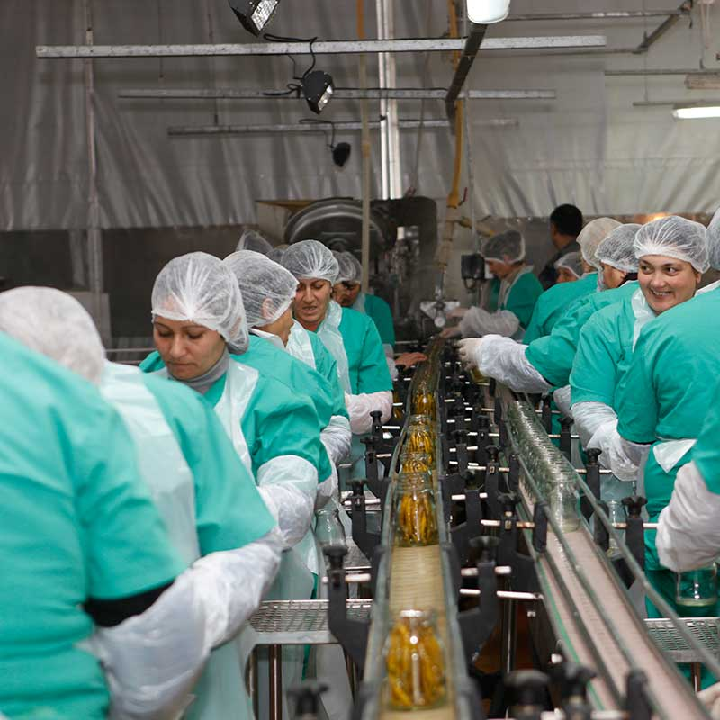Peltina caning factory