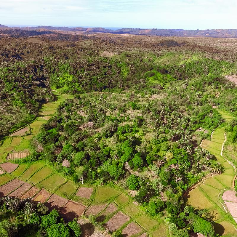 125 ha Vanilla Plantation Madagascar